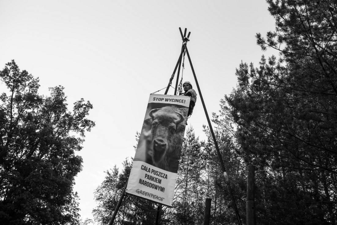 Protest w Puszczy Białowieskiej - Kolejny protest w Puszczy Białowieskiej. Przerwany przez policję [AKTUALIZACJA]