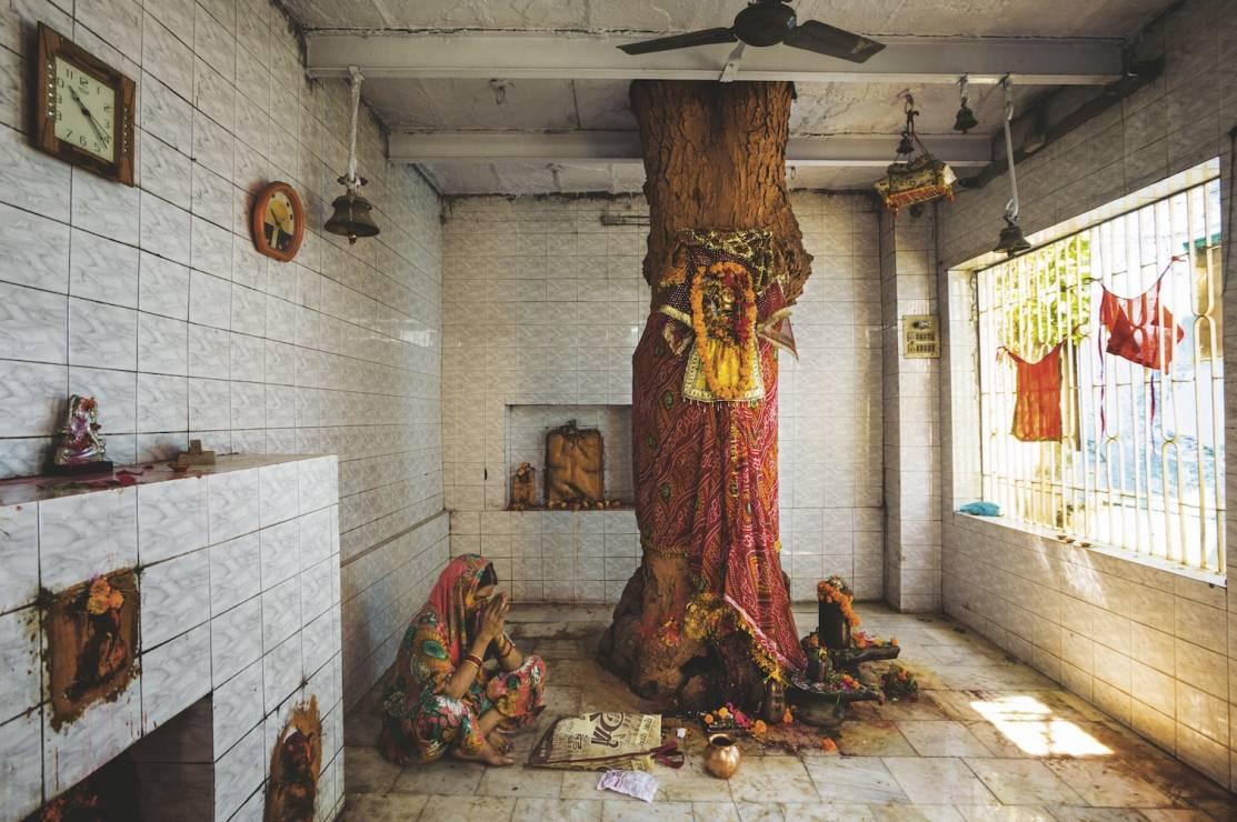 MIODLA INDYJSKA - Waranasi, Indie - 8 wyjątkowych drzew. Są dla nas inspiracją i pocieszeniem