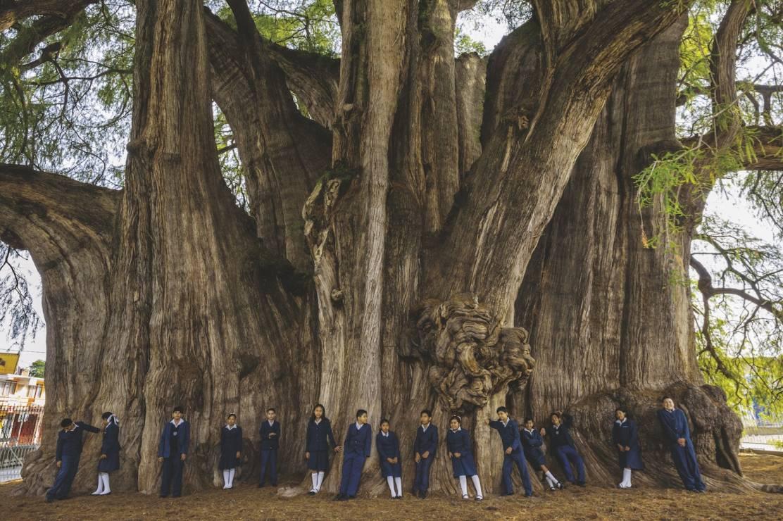 DRZEWO MONTEZUMY - Santa MarÍa del Tule, Oaxaca, Meksyk - 8 wyjątkowych drzew. Są dla nas inspiracją i pocieszeniem