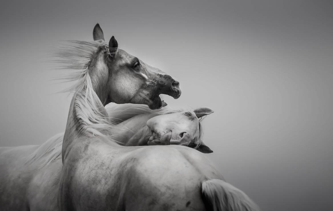 """I miejsce """"Taniec we mgle"""" – Katarzyna Okrzesik-Mikołajek - Wyślij zdjęcia i zostań laureatem Wielkiego Konkursu Fotograficznego"""