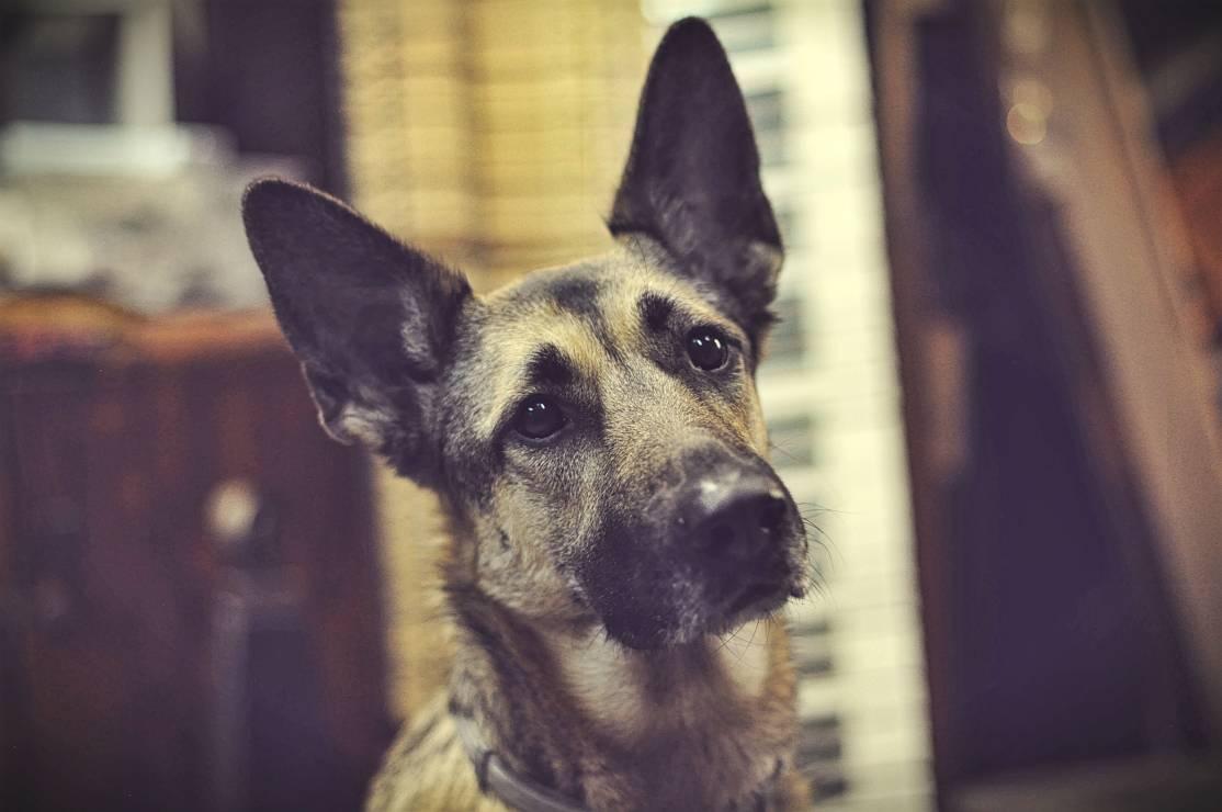 Kundelek na biegunie - Podróż z psem za granicę - przewodnik krok po kroku
