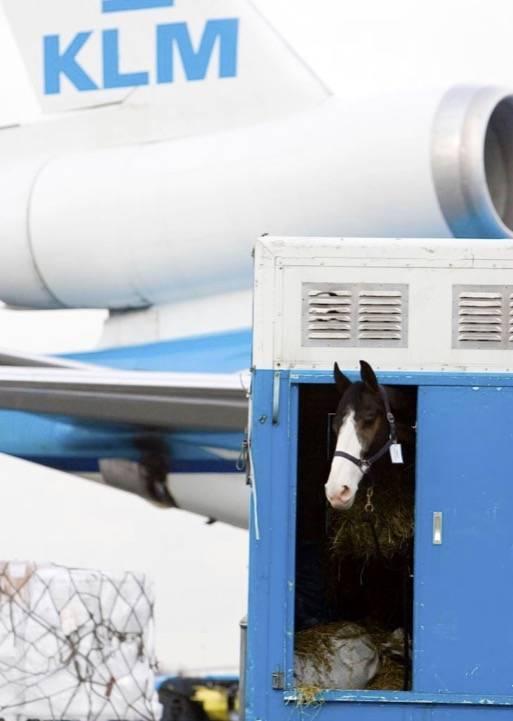 # 1. Konie wyścigowe - T-rex, Rolls-Royce, tygrys i dzieła sztuki - najciekawsze rzeczy transportowane w samolotach