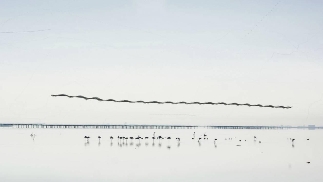 Ornitofotografia - Te zdjęcia to efekt wyjątkowego pomysłu. Gdyby ptaki pozostawiały ślady w powietrzu