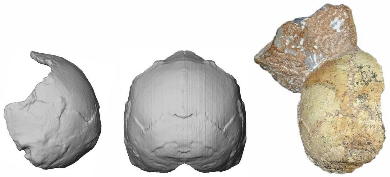 Ta tajemniczna czaszka z Grecji może zmienić to jak patrzymy na historię ludzkości - Tajemnicze znalezisko w Grecji. Ta czaszka zmienia to, co wiemy o historii ludzkości