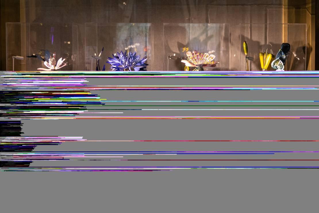 Botanika Leonarda. Niezwykła wystawa we Florencji (13.09-15.12.2019) - Zobacz świat roślin według Da Vinci. Wystawa Botanika Leonarda we Florencji